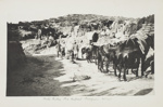 Gallipoli Military Campaign: Mule Gully Headquarters ; Doubleday Lawrence; October 1915; CA000316/002/0012