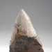 Procarcharodon megalodon tooth, 1800.175