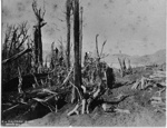 Tikitapu Bush.