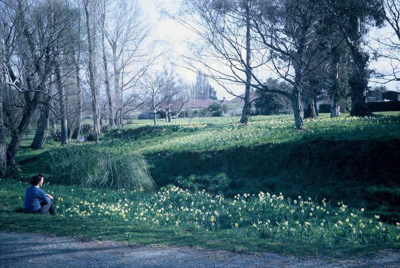 Image showing Spring bloom on banks of Poorman's S...