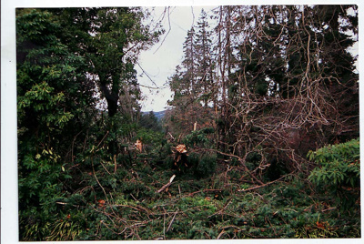 Storm damage at Isel Park July 2008; Sally Papps; 2008
