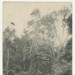 Postcard, Green Point, Bluff; Andersen, P.C.; 1910-1915; BL.P723(g)