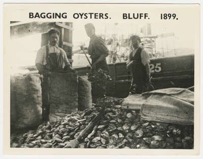 Photograph, Bagging Oysters; Unknown Photographer; 1899; BL.P663