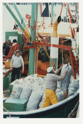 Photograph, Oyster Harvesting ; Unknown Photographer; 1980-1989; BL.P619