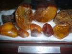 S Lewis' Kauri Gum collection ; 1065
