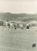 Photo (Digital): 1950s Athletics Meet at the Basin Reserve, Wellington v Auckland; c1950s; 2015.24.1