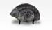 Ammonite. Jurassic., 11604