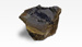 Fossil Fern. Cladoplebis sp, 11664