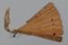 Fan, Brisé, Wooden carved; Unknown maker; 1850-1890; RI.LA01.08