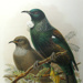 Book, History of the Birds of New Zealand; Walter Buller; 1994.3724.697