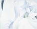 Painting, 'White Iris' diptych; Stevens, Elizabeth; 1988; ESC.95.007