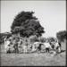 Photograph, 'Children at Play (Mataura School Children)'; Westra, Ans; 1996; ESC.96.002