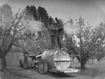 Orchard spraying, 1945, Kg 160564/6