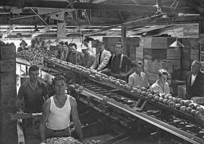 Tasman packing shed, circa 1940, Kg 153957/6