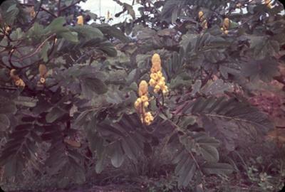 Slide: Yellow flower; Sybil Dunn; Keith Dunn; 2013.264.216