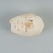 Bird egg: Cook's petrel, Tītī, Pterodroma cookii; Frances Shakespear; 2015.232.144