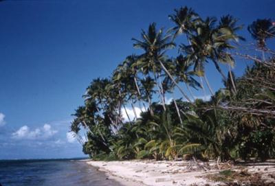 Slide: Beach with palm trees; Sybil Dunn; Keith Dunn; 2013.264.200