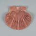 Mollusc shell: New Zealand scallop, Kuakua, Tipa, Pecten novaezelandiae; Frances Shakespear; 2015.232.129