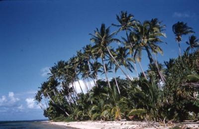 Slide: Beach with coconut palms; Sybil Dunn; Keith Dunn; 2013.264.197