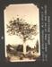Photograph: Kauri tree, Waitakere Ranges; Foss Tackaberry; 2015.69.105