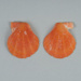 Mollusc shell: Fan shell, Talochlamys gemmulata; Frances Shakespear; 2015.232.126