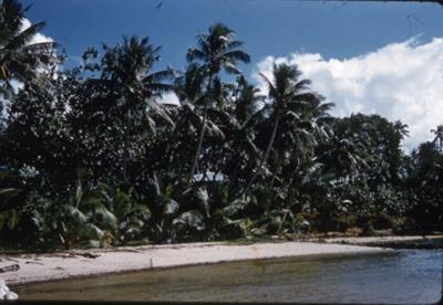 Slide: Beach with palm trees; Sybil Dunn; Keith Dunn; 2013.264.202
