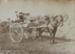 Photograph, First Prize Otautau Show; Randall, George Thomas; 1913; OT.2010.23