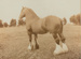 Photograph, Clydesdale Tam O'Shanter ; Cameron Photo; 1900-1906; OT.2007.23