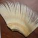 Block of baleen plates; Minke whale; SGHT.1992.5.55