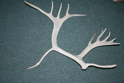 Reindeer Antler with inscription; SGHT.2010.16