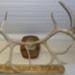 Reindeer Antlers; Reindeer; SGHT.1992.132