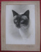 A mounted photograph of a cat taken in 1922.; 5th September 1922; 2010.1