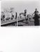 Photograph - Classing ewes. ; c 1930; 15017