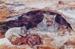 Photograph - Bark Painting - Wombats; 1995; 19347