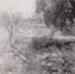 Photograph - Garden Hole (?). ; Kitchen, HD; 1949 - 1950; 17494