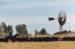 Photograph: Heard of Bullocks. a man on horseback and the Comet windmill. ; 1995; 15634