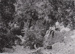 Photograph - New Zealand Gully; unknown; c 1910; 20378