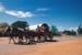 10th Anniversary ASHOF  horses pulling wagon; 1998; 18068