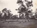 Photograph - Bushland. ; c 1920; 13992