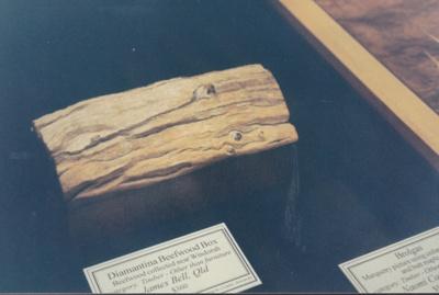 Timber - Diamantina Beefwood Box collected near Windorah.; 1995; 19887