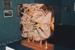 Photograph - Abstract Wooden Sculpture; 1994; 19335