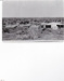 Photograph - Shearing shed and yards at Tamala Station.; c 1920; 15014