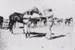 Photograph - Jockey and horse; c 1950?; IMG_20428.001.jpg.