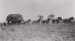 Photograph - Team of Horses pulling a load of wheat. ; c 1930; 20281