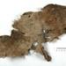 Fabric fragment; CG12.g