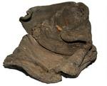 Baby's shoe; Circa 17th Century; CG7.a
