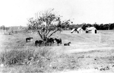 Coen Police Station tracker huts and police horses; 1928; PM0598