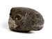 Head of a Sheep; Molly Macalister; 1977-1978; 54