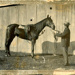 Image of Latch and trainer(?); c.1902; T200