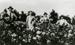 Photograph, Employees at Swenson's Greenhouse; circa 1915; M2017.1.112